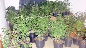 46690_marihuana_3